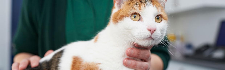 Flea control for cats